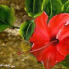 Red Amapola by Maria  Williams