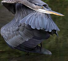The Great Blue Contortionist by Gary Fairhead