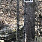 Jersus Saves Tree by WildestArt