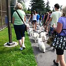 2011 Westie Rescue Walk and Fun Day by MarianBendeth