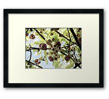 The Chocolate Vine Framed Print
