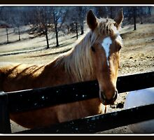 Horse hello by Butterfly2008