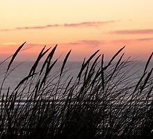 Dune Grass At Sunset by Samantha Higgs