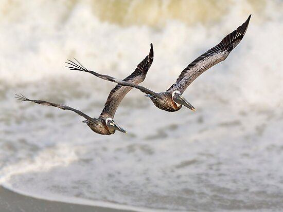 Never Leave Your Wingman - Pelican Pair by Kenneth Keifer
