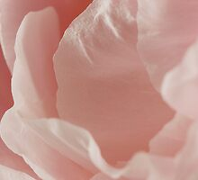 Pink Peony Petals by Michele Doucette