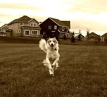 Happiness is, Edmonton Alberta by Laura-Lise Wong