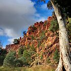 On the road through Warren Gorge by Simon Bannatyne