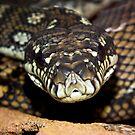 Hungry Python by Jason Scott