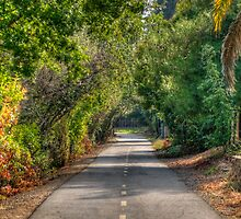 Folsom Trail by Diego  Re