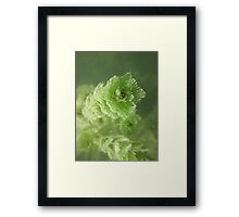 Bubble Eye Weed Framed Print