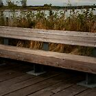 The Bench by MaluC