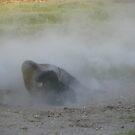 Dust Bath by thelonewolffft2