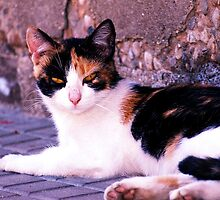 Cat by DavidCucalon