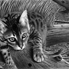 &quot;Talek&quot; cat drawing by Matt Deakin