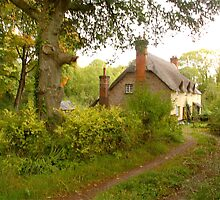 Cottages at Ashclyst ... by Mike  Waldron