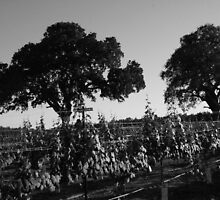 Two Oaks in the Vineyard by CherylBee
