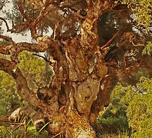 Paper Bark Tree by Elaine Teague