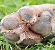 A Dog's Footprint by Jessica Hooper