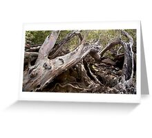 Tree Wreck  Greeting Card