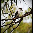 The Laughing Kookaburra by Anna Ryan
