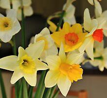 Daffodils by gcdigiphoto