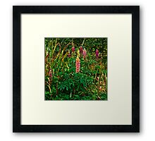 Lupins in the Pond Garden Framed Print