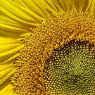 Sunflower Radiance by PatChristensen