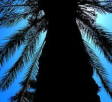Palm silhouette by rosalie photography