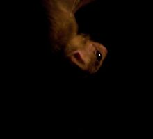 Bat - Berlin Zoo by Laura Mazar