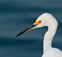 Snowy Egret Portrait by Michael Mill