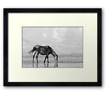 Wild Mustang in Black & White Framed Print