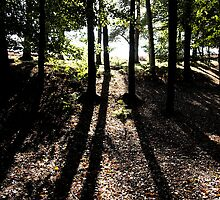 Shadows in the woods. The Wrekin Shropshire. by SEFPhotography