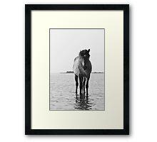 Wild Horse Walking - NC Outer Banks Framed Print