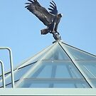 National Eagle Center, Wabasha MN by sranders242moo
