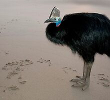 Ms Etty - cassowary on the beach by Jenny Dean