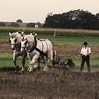 Ploughing contest - 3 by Anne Nierengarten