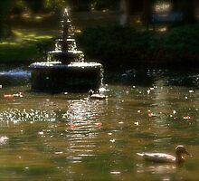 Ducks in Beacon Hill Park  by jsflysrc