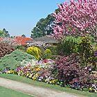 Toowoomba Garden 2 by Graeme  Hyde