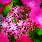 A Pink Dream by naturelover