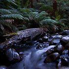 Badger creek 2 by Daniel Berends
