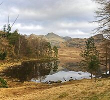 The Tarn In March by Jamie  Green