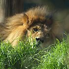 The Lion Sleeps  by Seraphina6