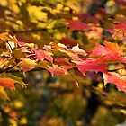 Autumn leaves by PhotosByHealy