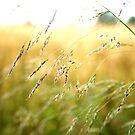 Oh.. l'été et ses souvenirs 2 by monaiman