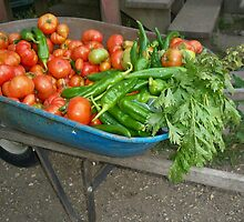 The Harvest by Diane Trummer Sullivan