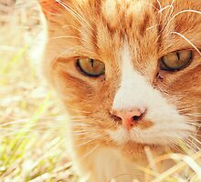 Ginger Cat by Liam Liberty