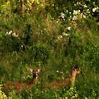deer in Mineral Springs pasture by Laurkat