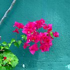 Bougainvillea on Blue Wall by RevJoc