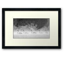 Swans In The Mist Framed Print