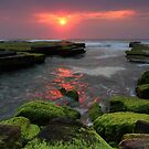 Weedy Sunrise Turimetta by Matt Penfold